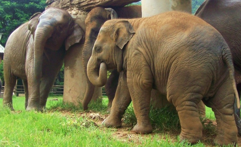 Up-close with a herd of elephants at Elephant Nature Park: photo and story from dtravelsround.com