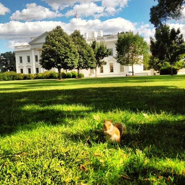 A squirrel photobombs the White House lawn