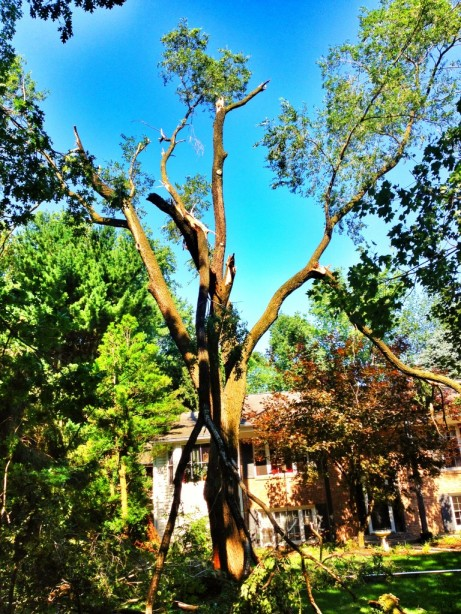Trees broken from the derecho storm damage in Maryland