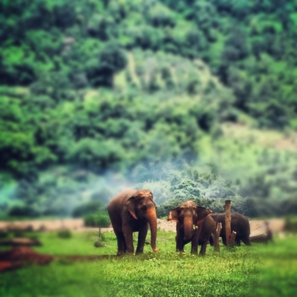 One of the elephant herd enjoys some grazing at Elephant Nature Park