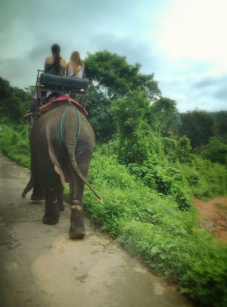 An elephant from a nearby trekking camp