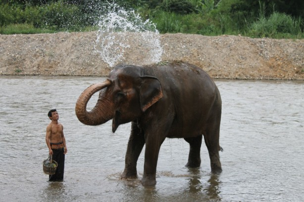 Bath time at Elephant Nature Park