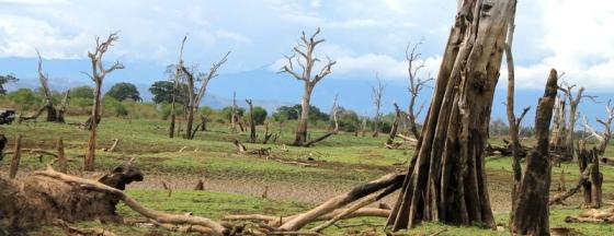 Udawalawae landscape