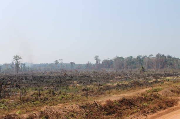 The remains of a jungle in Cambodia, a result of slash and burn