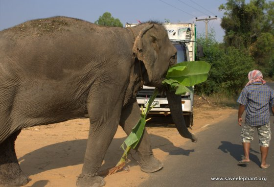 Elephant Nature Park Truck Lucky
