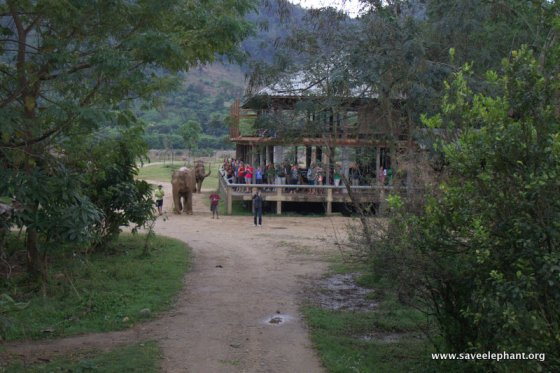 Elephant Nature Park Visitors