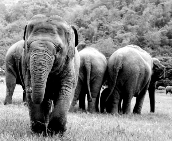 The Elephant Nature Park