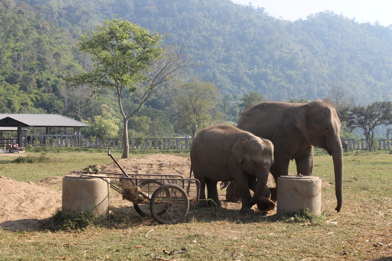 Getting a tattoo in Thailand: in the jungle