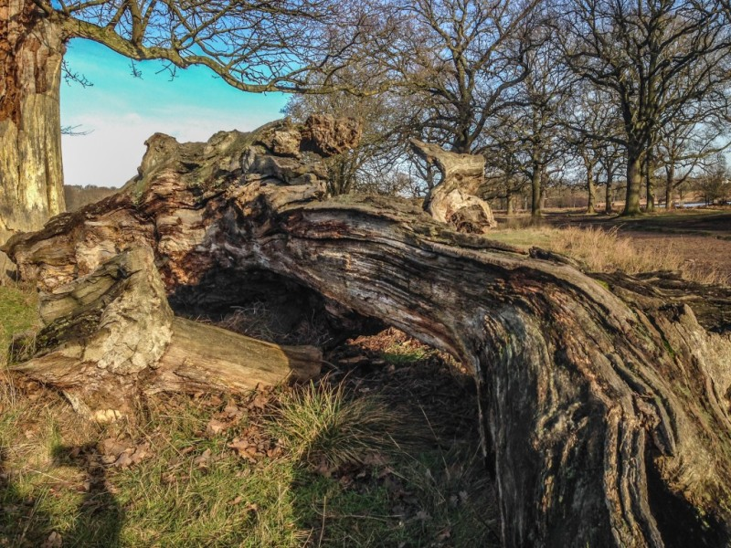 Richmond Park | Cool things to do in London via www.dtravelsround.com
